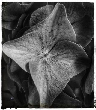 Fleur_p.jpg